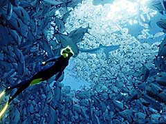 DMM GAMES,「ABZÛ」と「Brothers: A Tale of Two Sons」の配信を本日スタート。505 Gamesのタイトルを,今後もぞくぞく配信予定